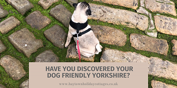 Have You Discovered Your Dog Friendly Yorkshire?